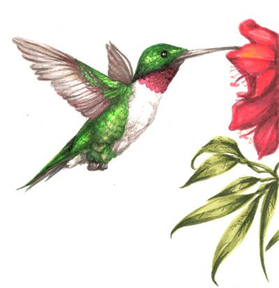 400x413 Hummingbird Drawings Displaying (20) Gallery Images