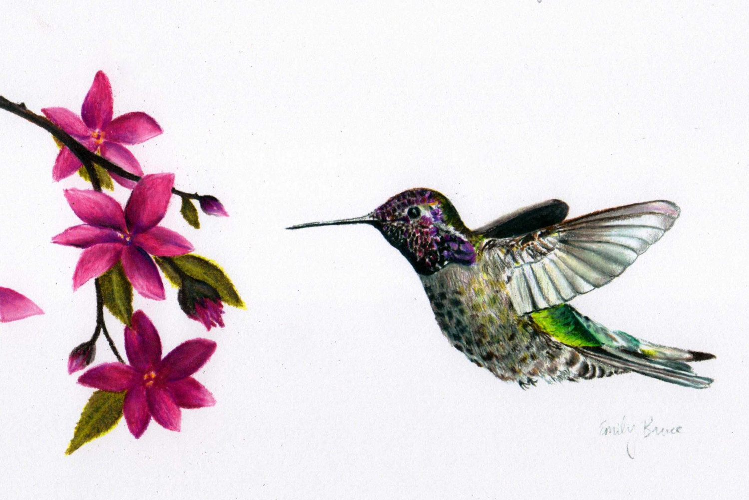 1500x1001 Colored Pencil Hummingbird With Flowers 8x10 Print