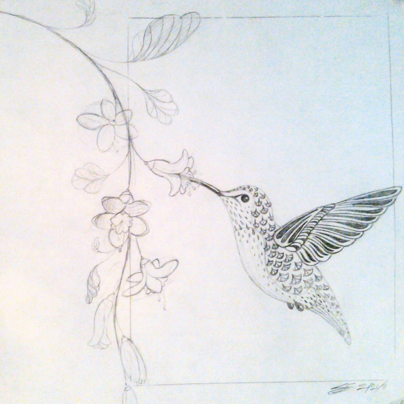 1576x1576 Drawings Of Hummingbird And Flowers Hummingbird And Flower Pencil