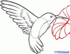 236x183 How To Draw A Hummingbird And Flower, Step By Step, Birds, Animals