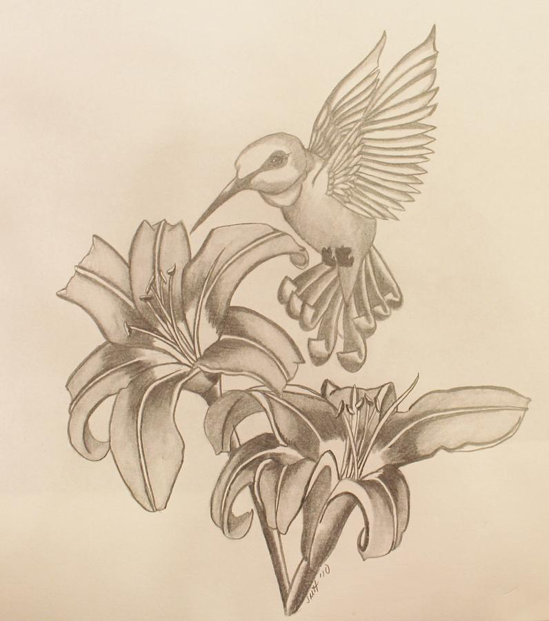 796x900 Image Result For Sketches Of Hummingbirds With Flowers Doodles