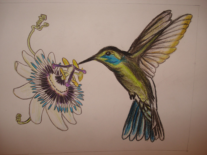 700x525 Passion Flower And Bird (Hummingbird) By Astridtekenares