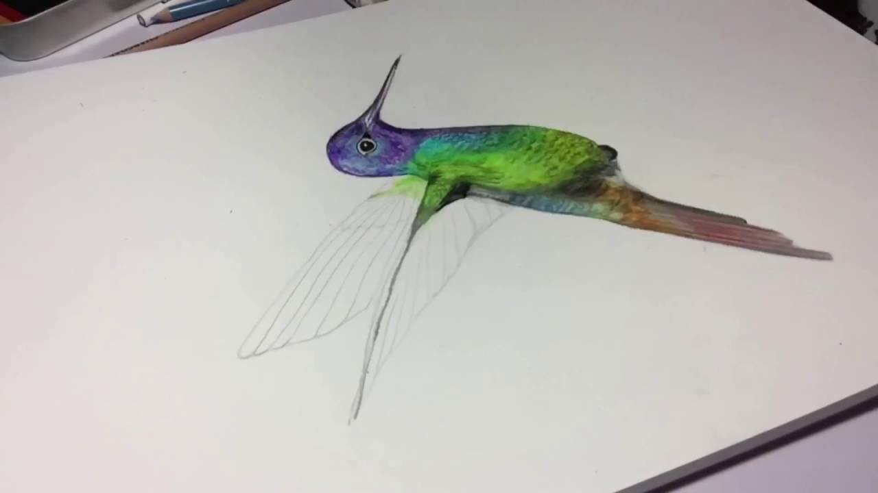1280x720 3d Hummingbird Drawing With Colored Pencils
