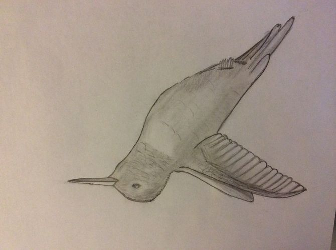 670x500 How To Draw Hummingbirds 7 Steps (With Pictures)