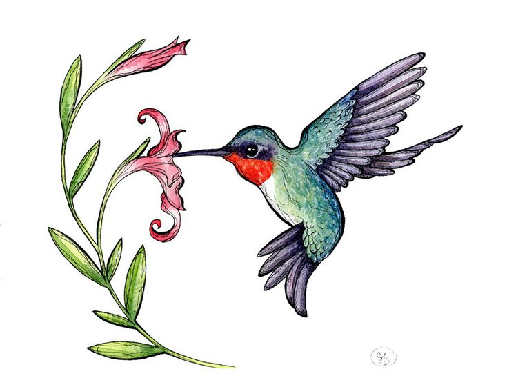 hummingbird drawing clip art at getdrawings com free for personal rh getdrawings com