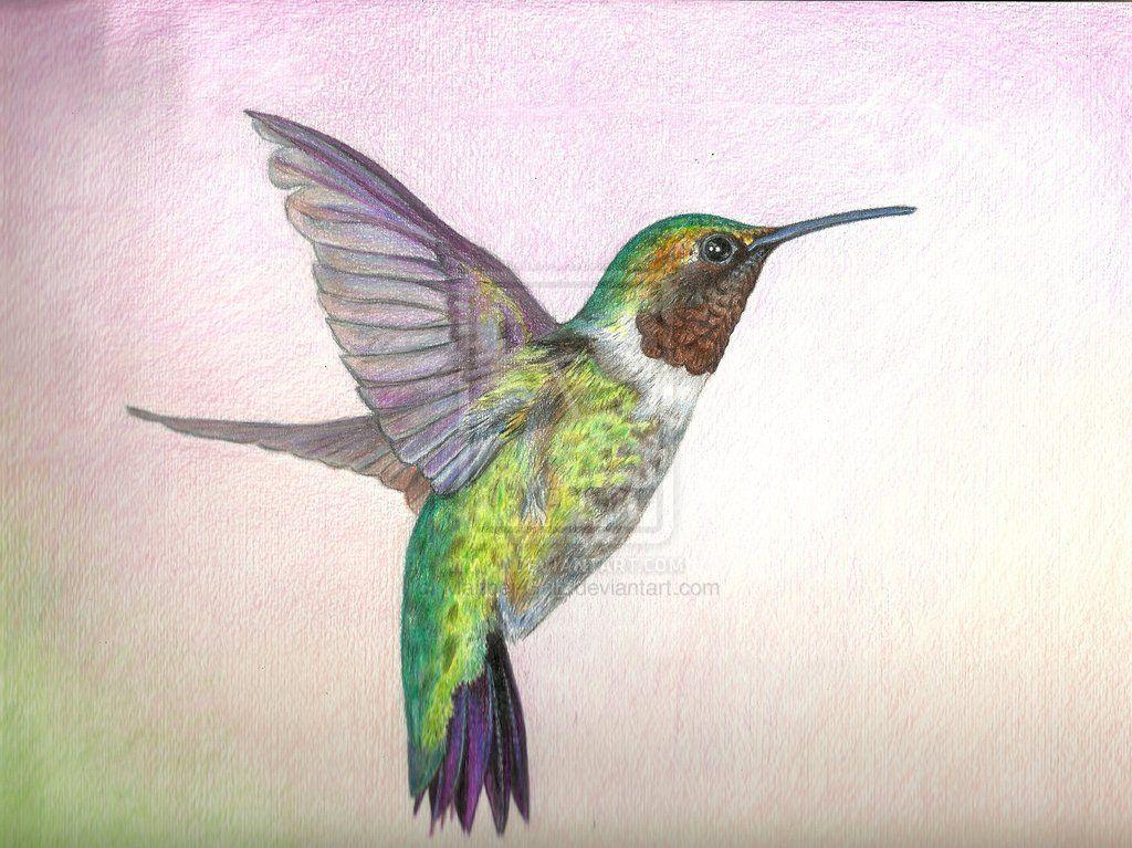 1024x767 Hummingbird In Colored Pencil By Maribel