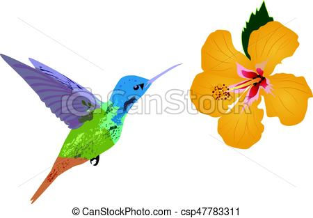 450x313 Vector Hummingbird Vector Clip Art