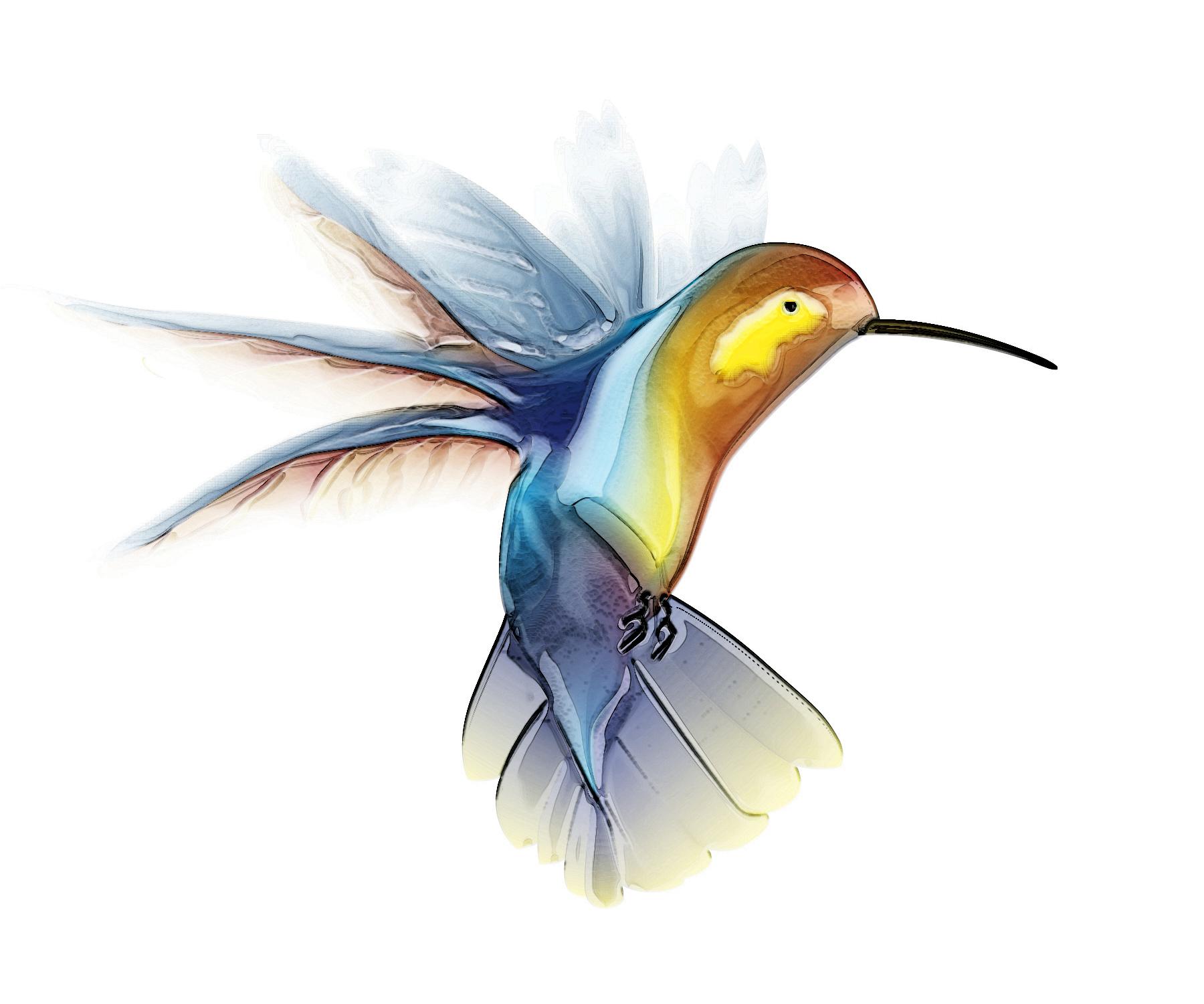 1800x1500 Hummingbird Drawings Hummingbird Image