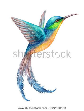 357x470 Watercolor Illustration, Flying Hummingbird Isolated On White