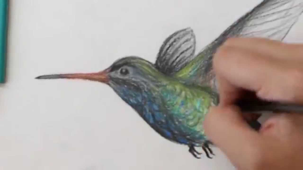 1280x720 Colored Pencil Drawing Of A Hummingbird
