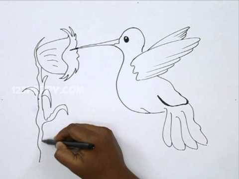 480x360 How To Draw A Hummingbird