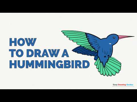 480x360 How To Draw A Hummingbird In A Few Easy Steps Drawing Tutorial