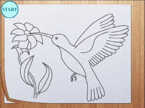 480x360 How To Draw Humming Bird Colibri