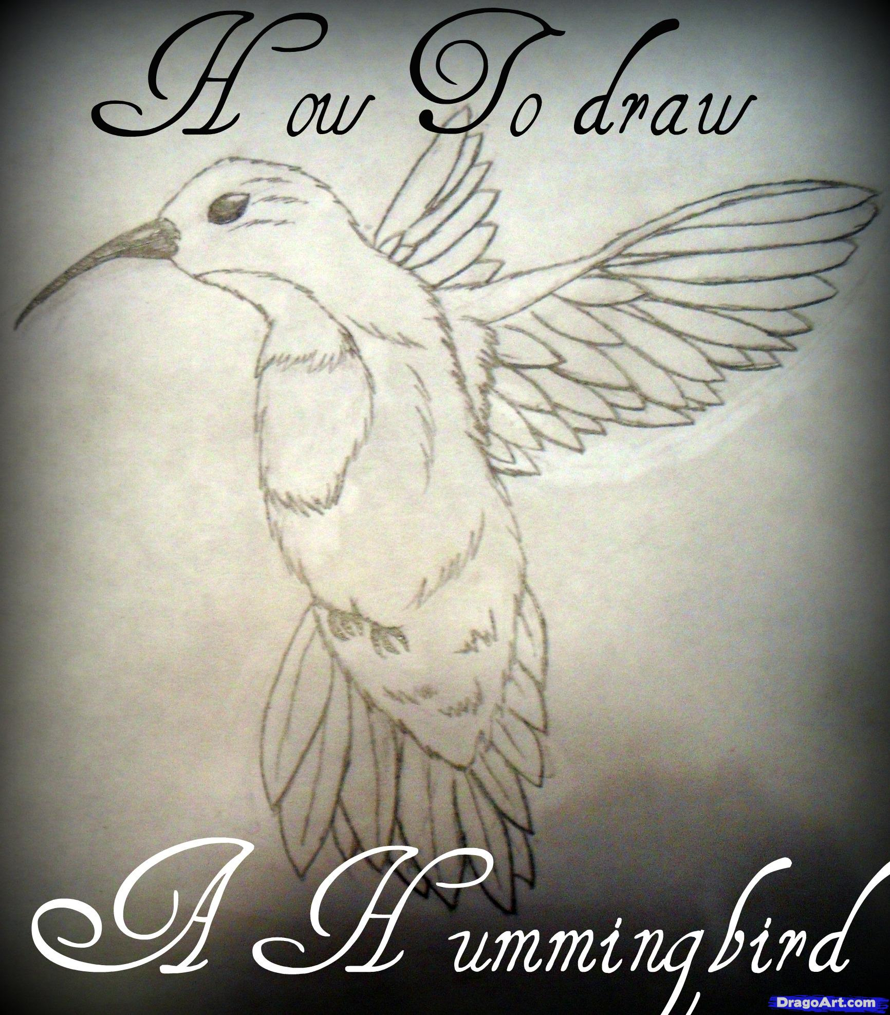 1732x1975 How To Draw A Hummingbird