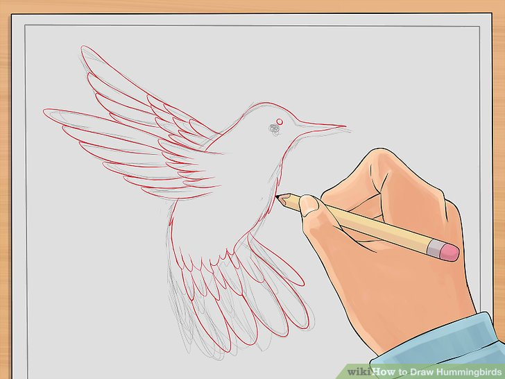 728x546 How To Draw Hummingbirds 7 Steps (With Pictures)