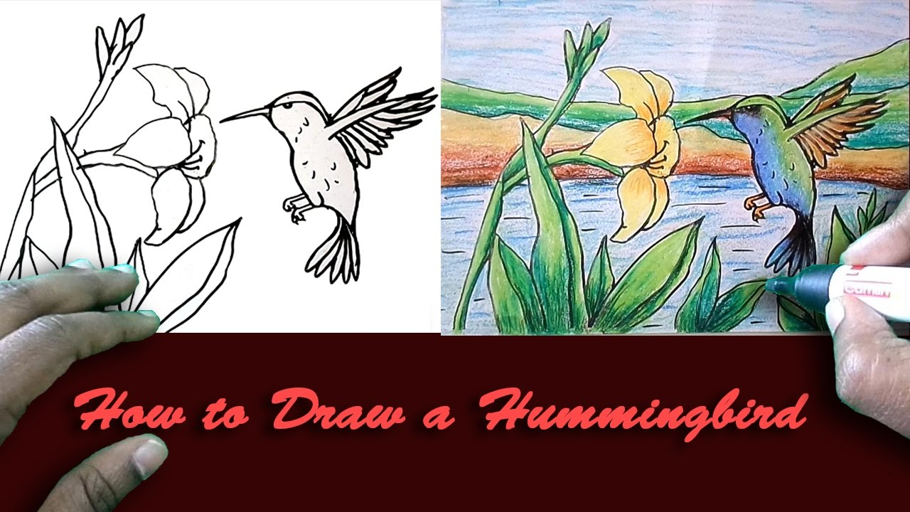 1280x720 How To Draw A Hummingbird Easy Draw Step By Step