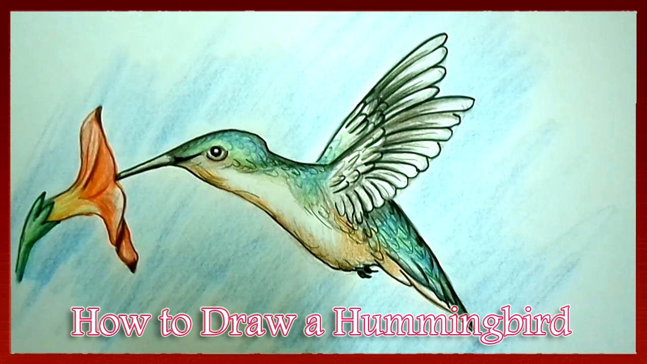 1280x720 How To Draw A Hummingbird Step By Step