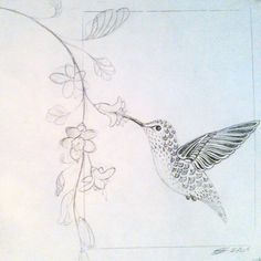 236x236 How To Draw A Hummingbird And Flower, Step By Step, Birds, Animals