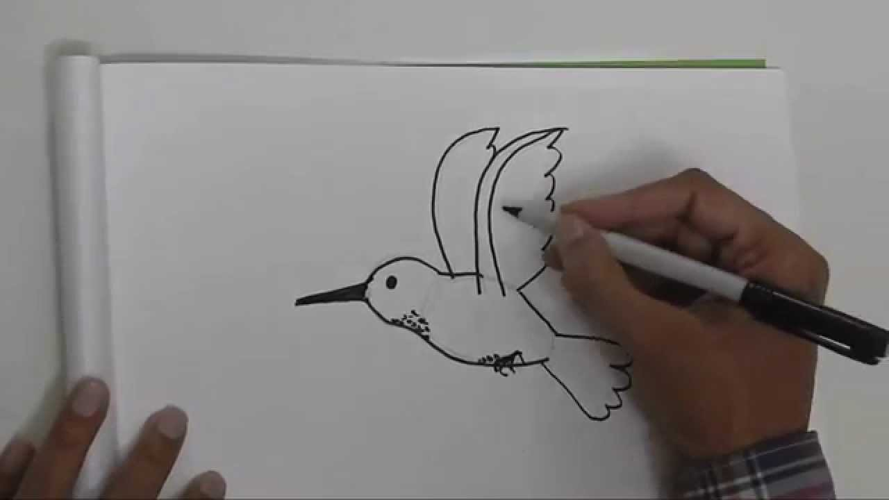 1280x720 How To Draw A Humming Bird