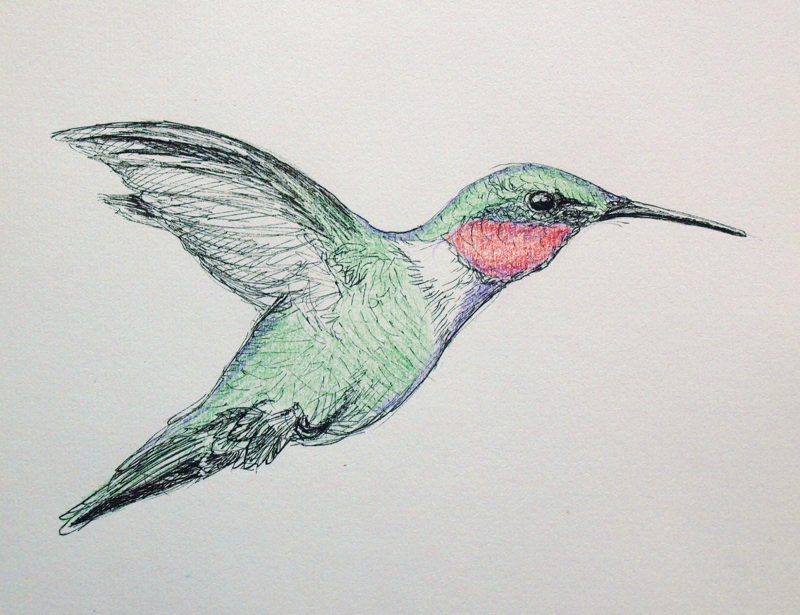 1600x1230 Artiqueryrose Hummingbird Sketch, Ink And Pencil
