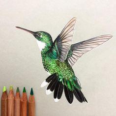 236x236 How To Draw A Hummingbird