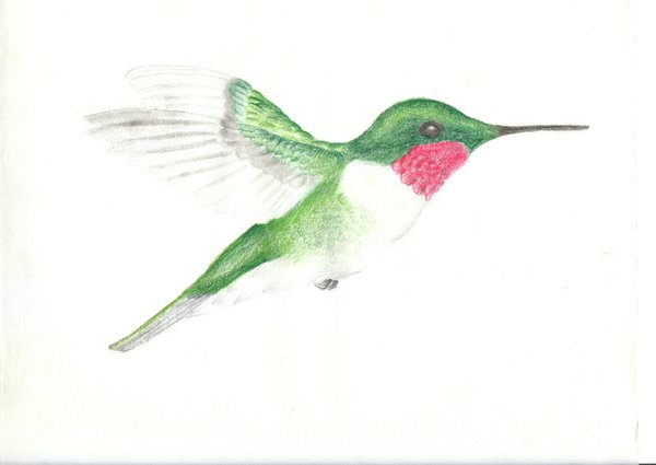 600x425 hummingbird pencil crayon by jonnygstyles on deviantart
