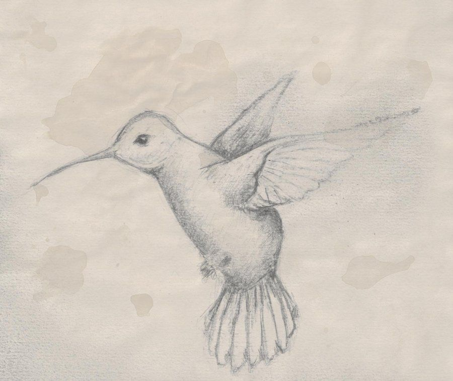 900x757 hummingbird pencil drawings hummingbird sketch by benjirox