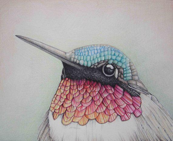 570x466 Pencil Art Work Close Up Hummingbird Mixed Media Original Drawing
