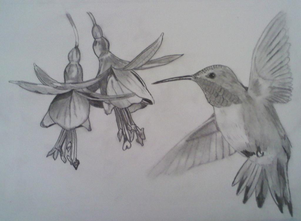1024x754 Pencil Drawing Of Hummingbird Jeremy