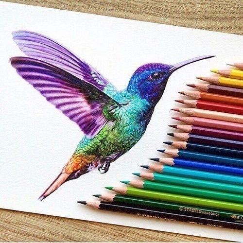 500x500 Drawing Birds Colors Tumblr