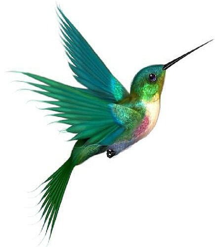 435x500 Flying Hummingbird Tattoo Design Idea