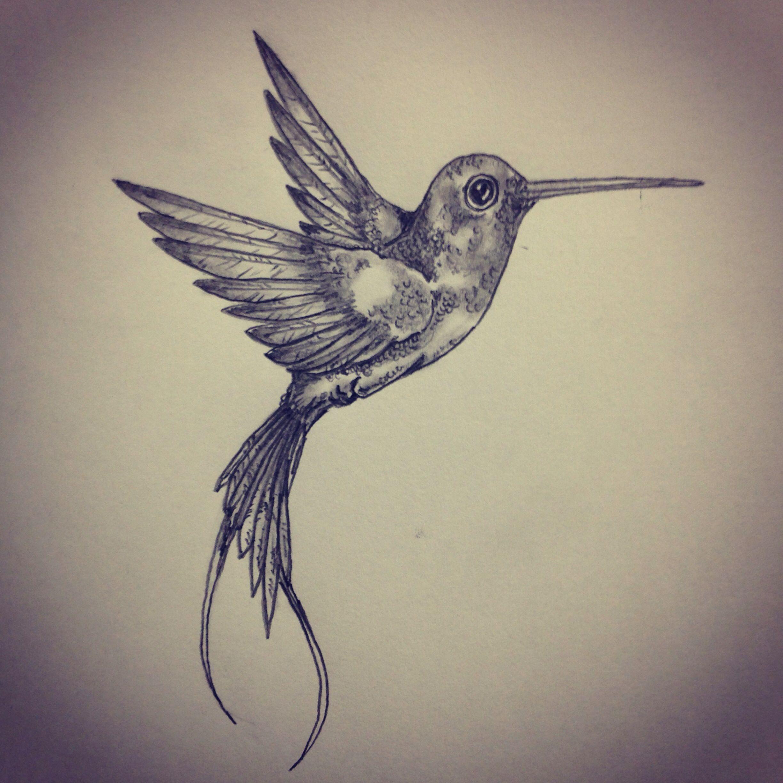 2448x2448 Hummingbird Tattoo Sketch By