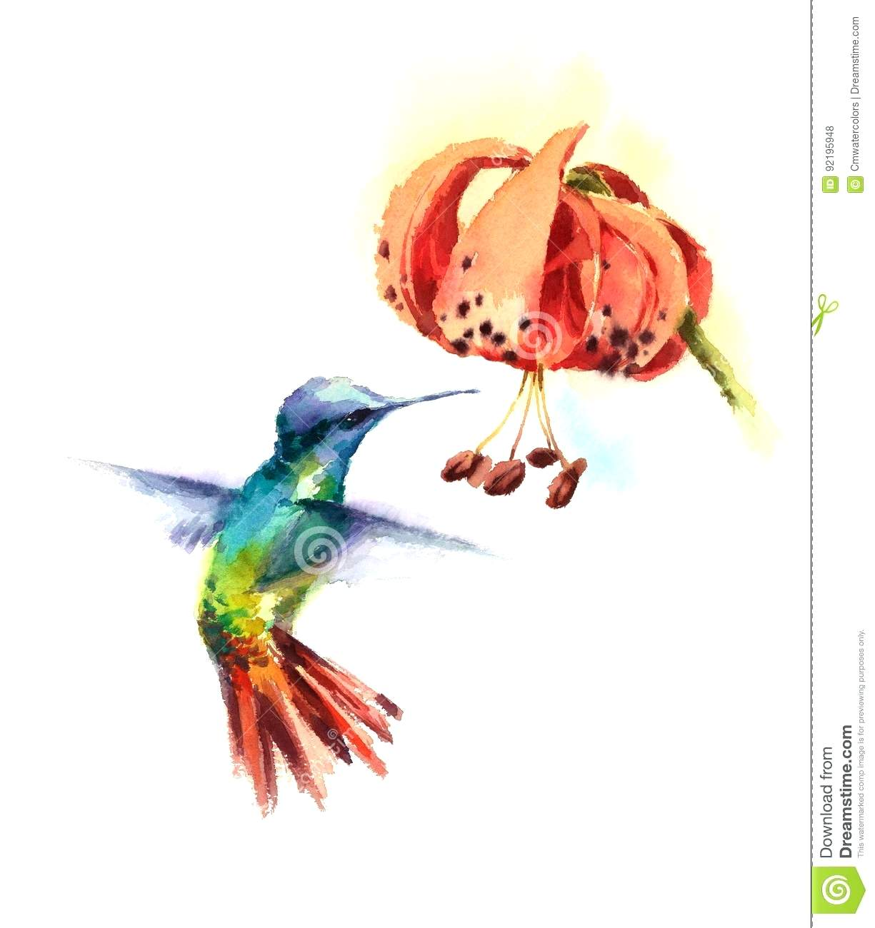 Hummingbirds And Flowers Drawing At Getdrawings