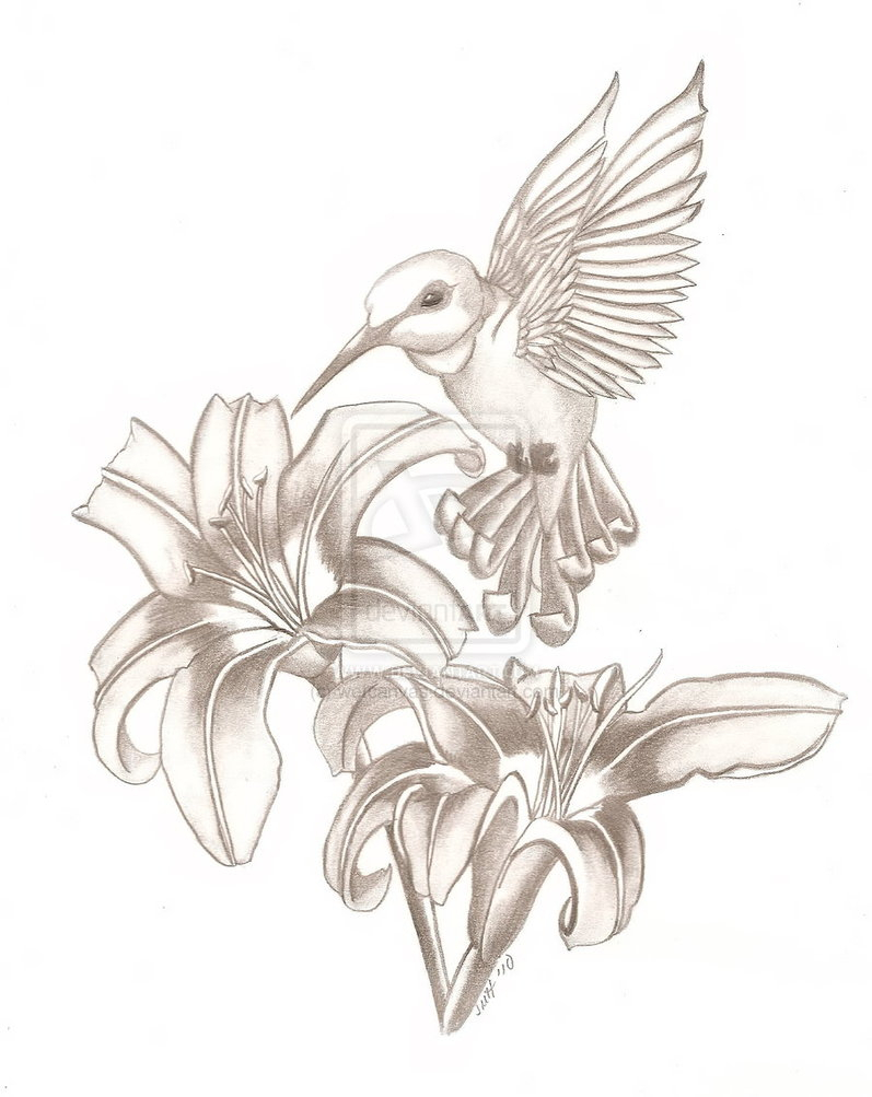 797x1003 Drawings Of Hummingbirds And Flowers Drawn Hummingbird Hummingbird