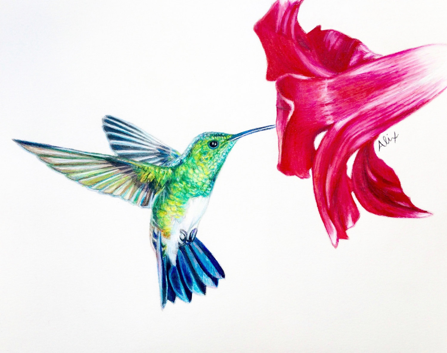 1500x1185 Pictures Colored Pencil Drawings Of Hummingbirds,