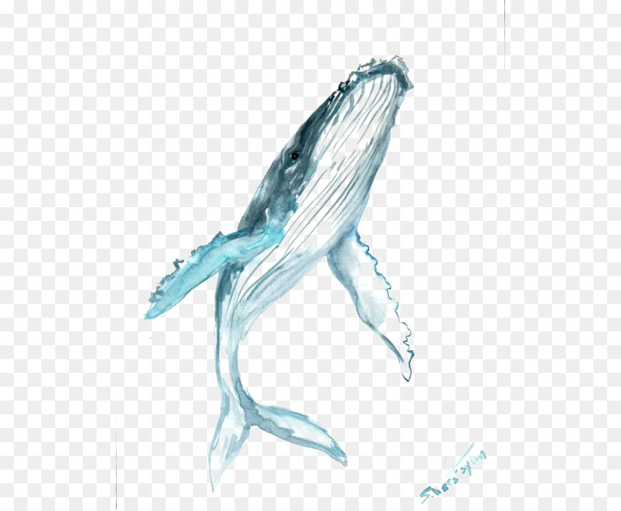900x740 Humpback Whale Drawing Watercolor Painting Clip Art