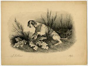 300x227 Antique Drawing Hunting Dog Pointer Stark 1894 Ebay