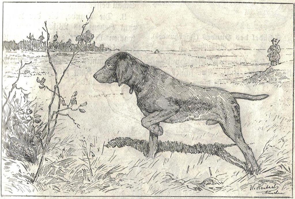 1024x689 Fileheubach Hunting Dog.jpg