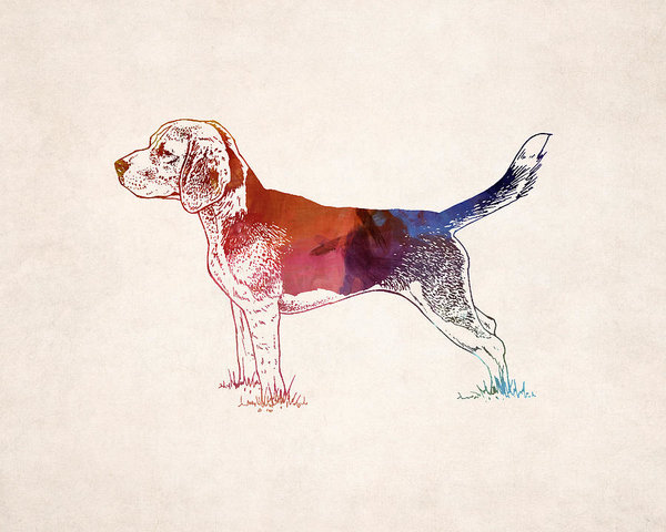 600x480 Hunting Dog Drawing Poster By World Art Prints And Designs