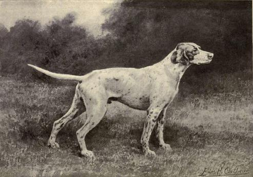 493x346 Training The Hunting Dog For The Field And Field Trials By B