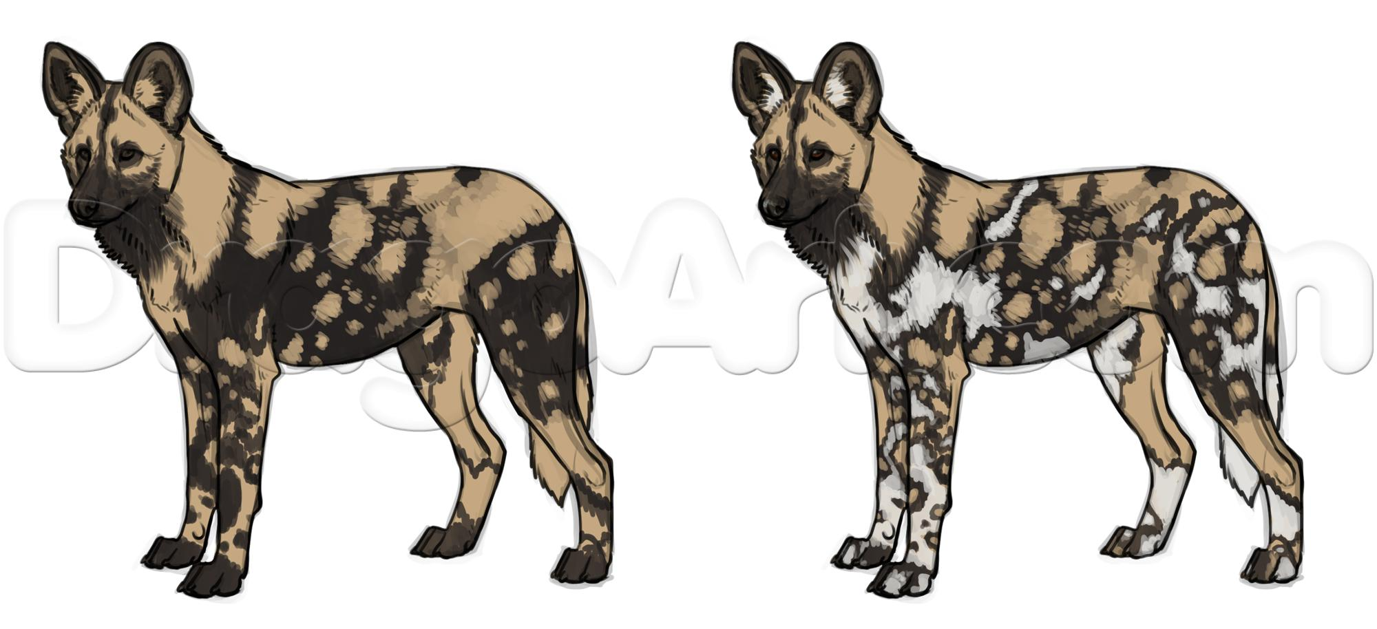 2000x914 How To Draw African Wild Dogs Step 17 African Wild Dogs