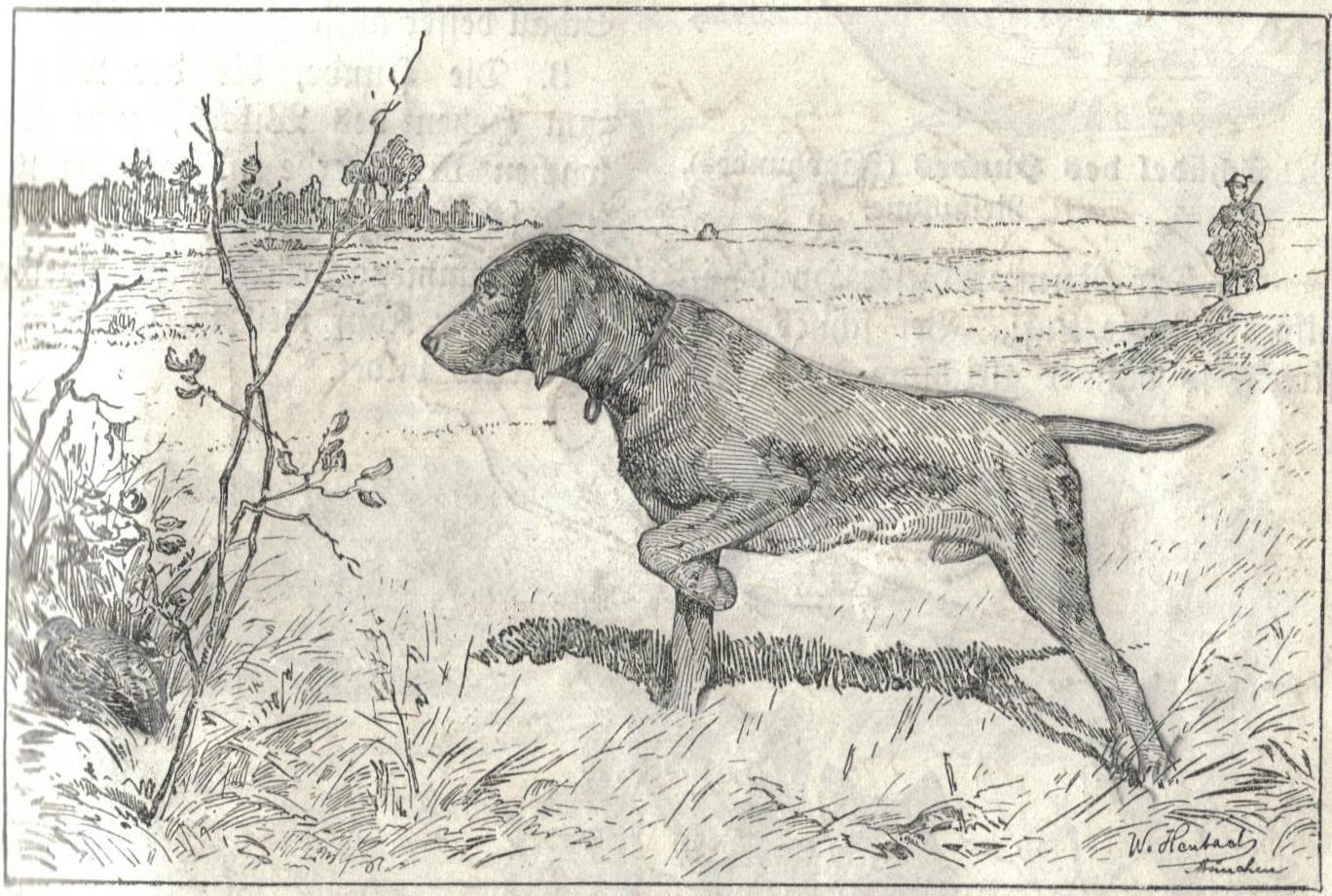 1368x921 Drawn Hunting Hunting Dog