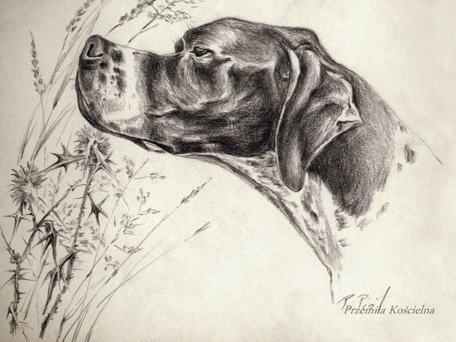 1600x1200 English Pointer. Pencil Drawing. Dog Art Amp Design