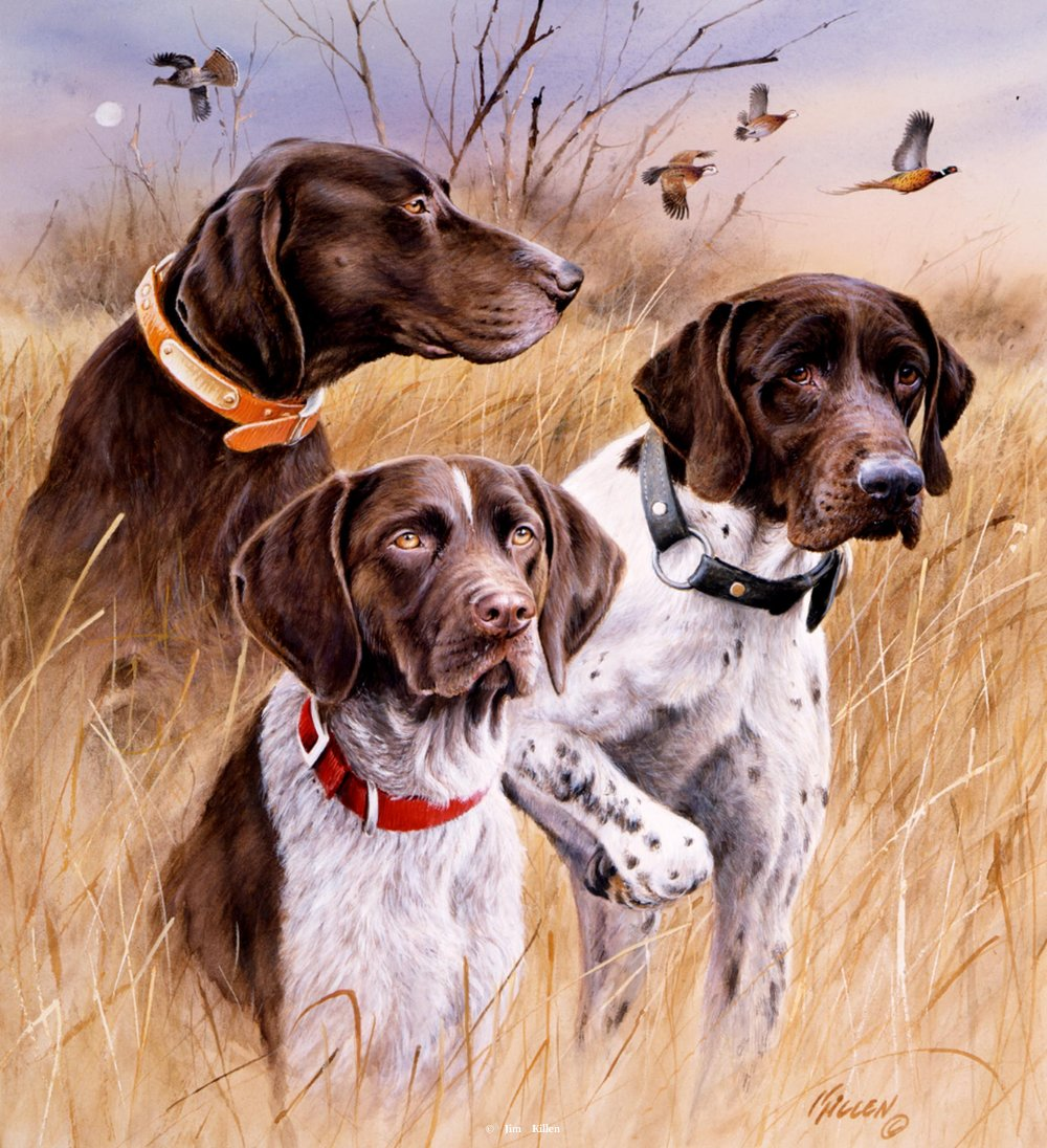 1000x1096 Great Hunting Dogs