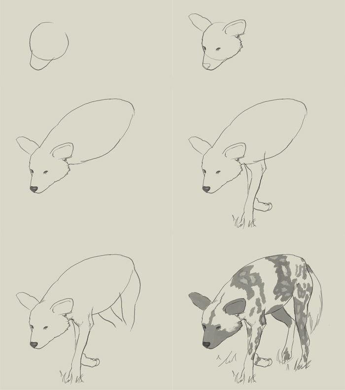 700x792 How To Draw African Wild Dog