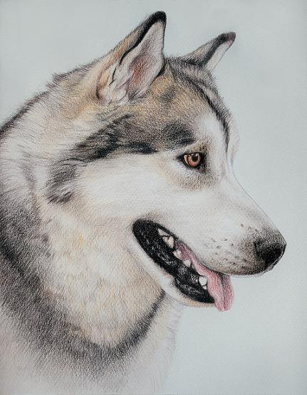 husky dog drawing at getdrawings com free for personal use husky