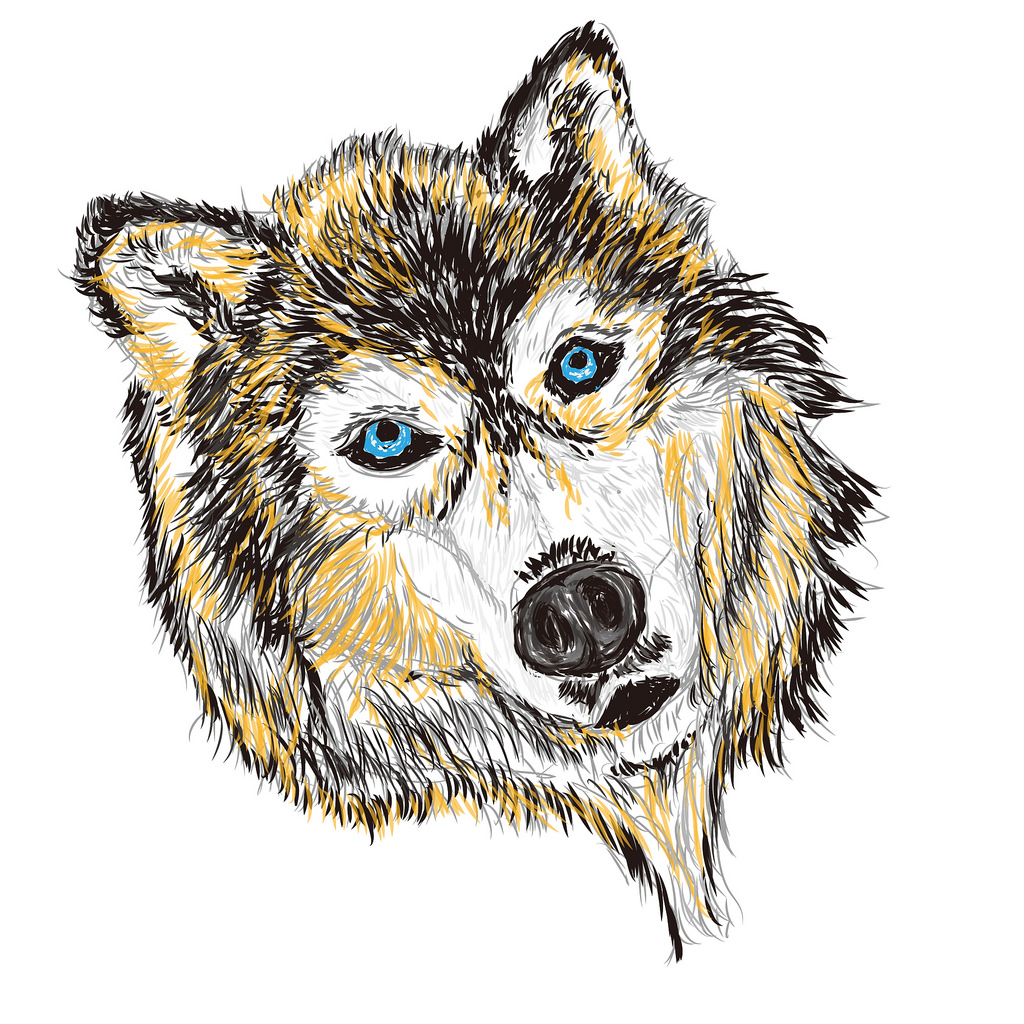 1024x1024 The World's Best Photos Of Husky And Sketch