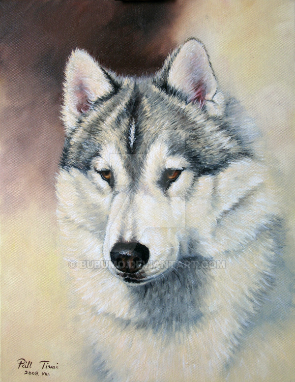 Husky Face Drawing At Getdrawings Com Free For Personal Use Husky