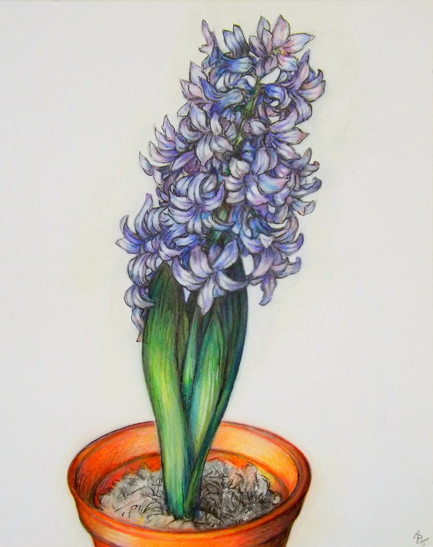 1186x1500 Austen Pinkerton Artwork Hyacinth Original Drawing Crayon