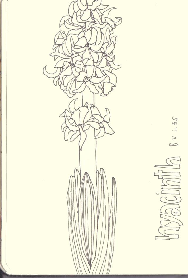 639x945 Lime Green Cardi Hyacinth Bulbs And Drawing
